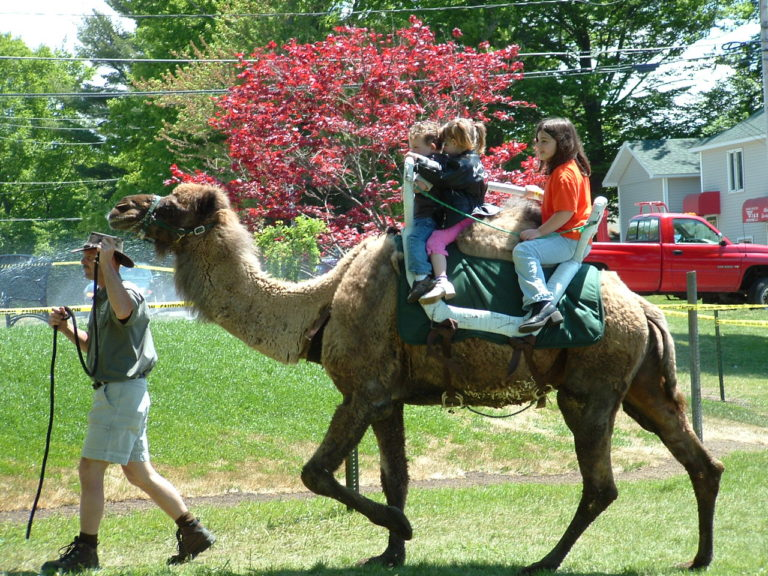 Old Fashioned Days Petting Zoo