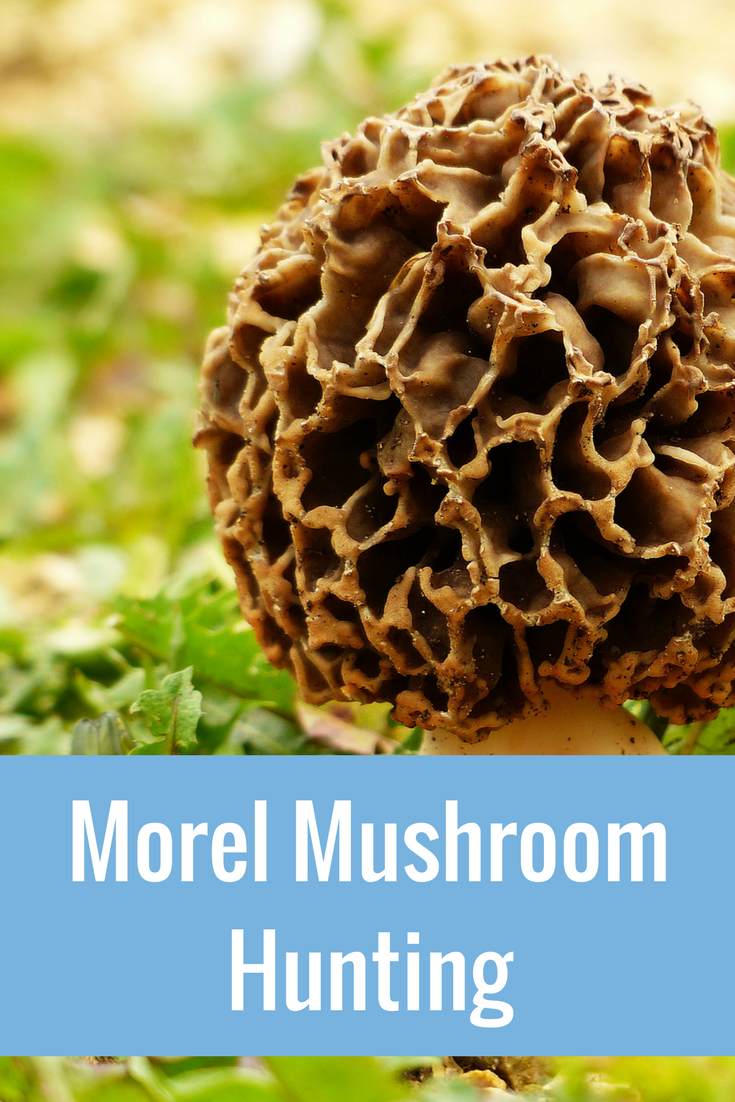 Mushrooms! Morels…Muskegon!