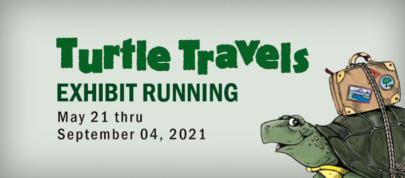 Cartoon turtle promoting Turtle Travels is at the Lakeshore Museum Center