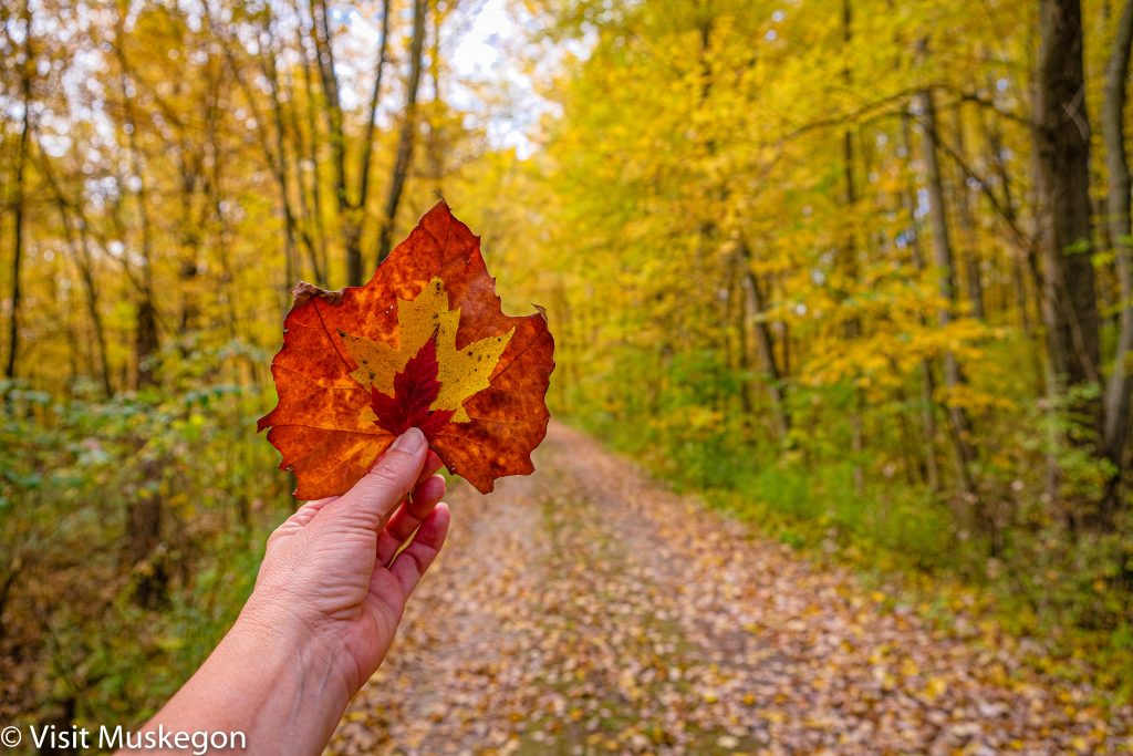 woman's hand holds 3 fall colored leaves up in front of leaf covered trail flanked by yellow trees